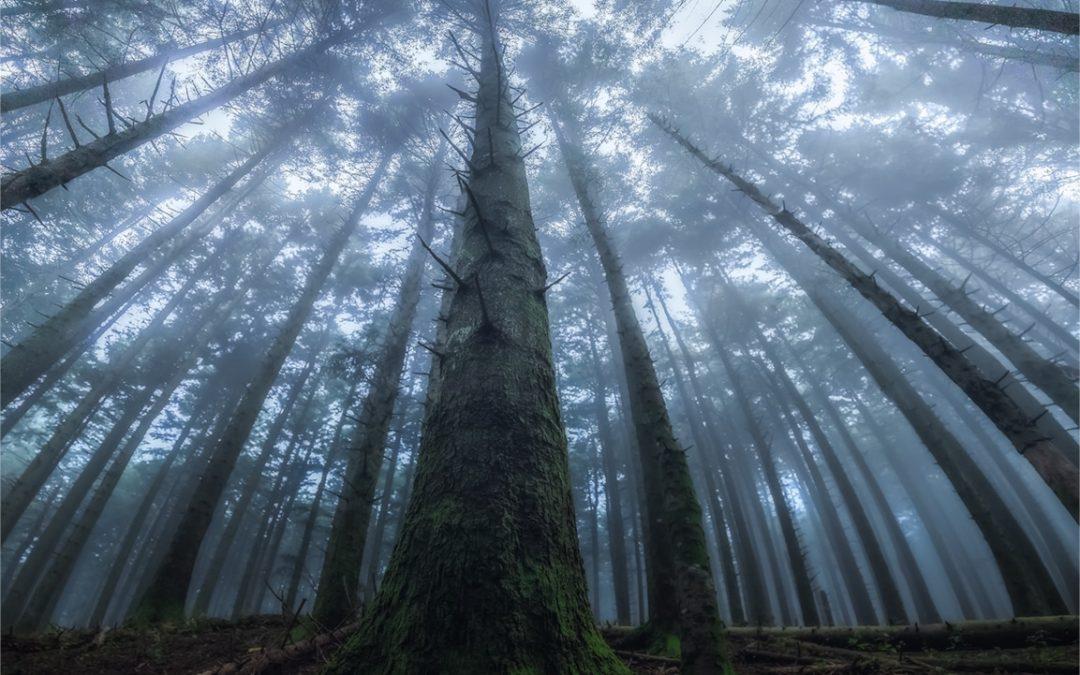 抬頭仰望絕美森林上空!攝影師Manuelo Bececco用鏡頭捕捉光影交錯的仰視之美