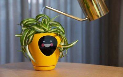 植物化身寵物 智能盆栽Lüa新熱潮!一同感受植物的喜怒哀樂