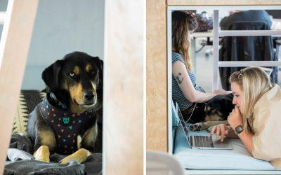 打造與寵物一起上班的完美辦公室設計 美國建築工作室NBBJ溫馨力作