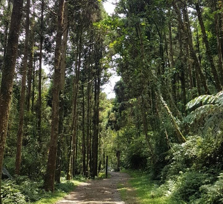 【遊台灣】放暑假!帶孩子一起走步道!
