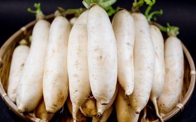 【好食材】蘿蔔,冬季到初春最著時