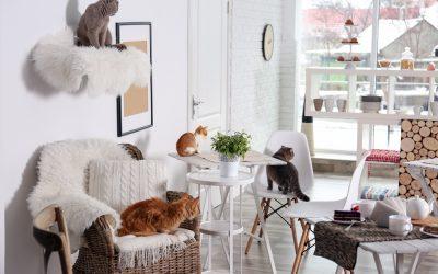 【跟動物一起住】有毛小孩的家,空間建材這樣挑