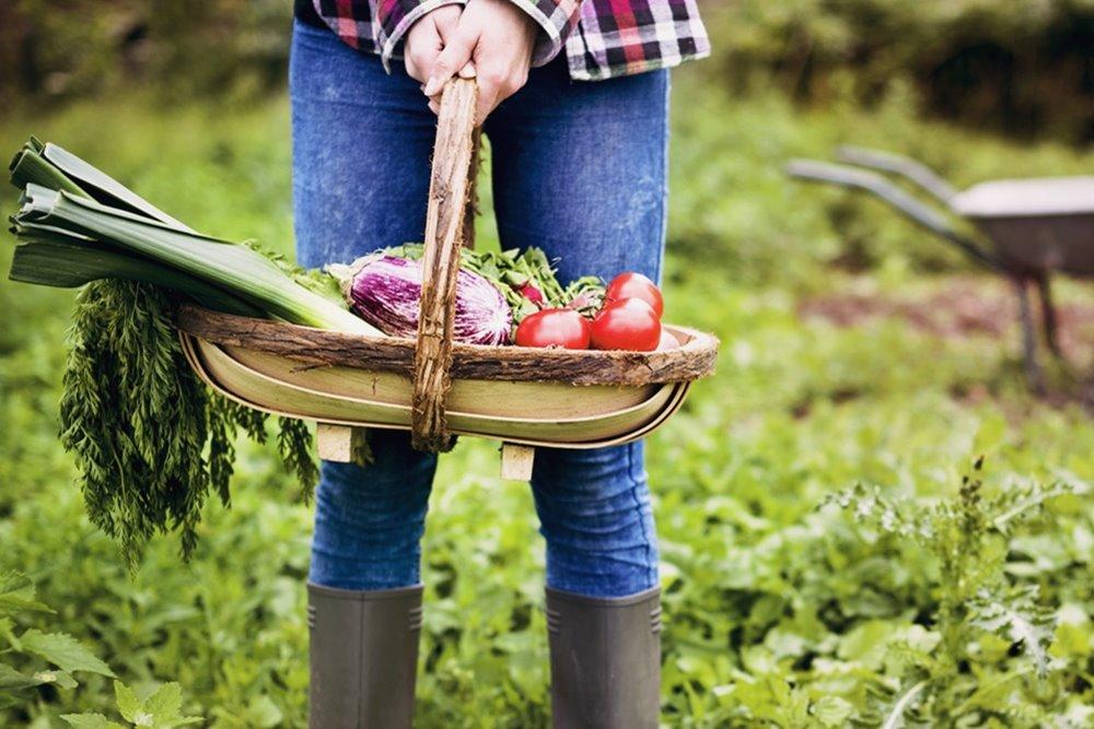 【好生活】自然農法 向大地取經