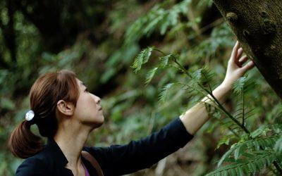 【看人物】詹鳳春:樹木的世代交替,才是真正的永續