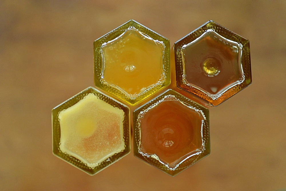 【城市養蜂】蜜蜂與牠的花花世界